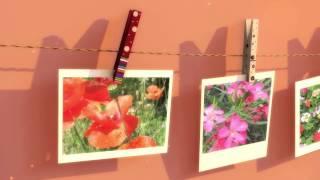 Free Flower Desktop Wallpapers Download
