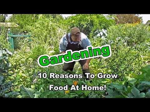 Gardening: 10 Reasons To Grow Food At Home!