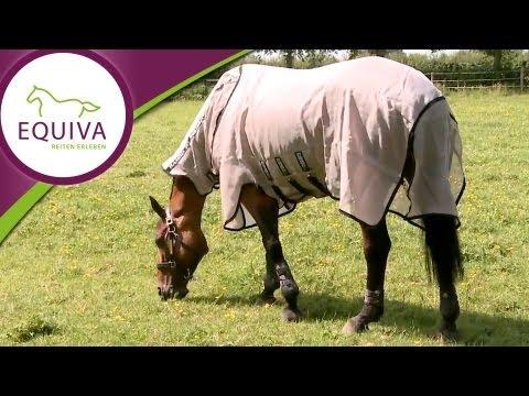 Geeignete Decken für jedes Pferd - so findest du die passende Decke