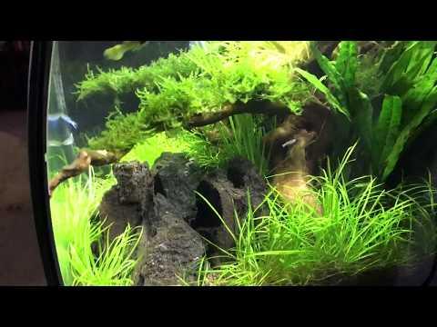 8 week old (new) aquascape!