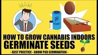 Germinating Cannabis Seeds - How to grow marijuana course for dummies - Growing Cannabis Indoors 101