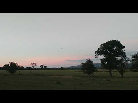 avios-bushmule-rc-plane-short-flight
