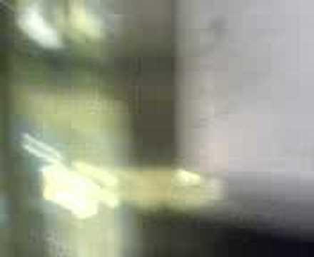 Die Schuppenflechte die fressende Flechte des Fotos
