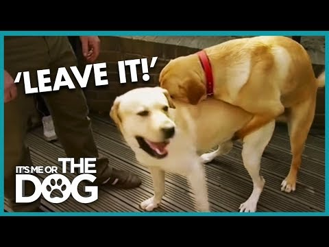 How To Stop Your Dog Humping | It's Me Or The Dog