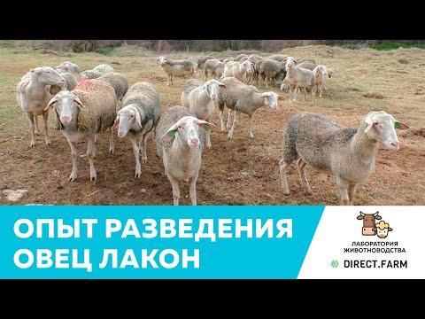 , title : 'Опыт разведения, содержания и кормления молочных овец породы лакон