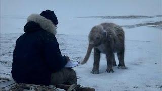 Сенсация! Ученные нашли Настоящего МАМОНТА в Леднике! Документальные фильмы, фильмы история