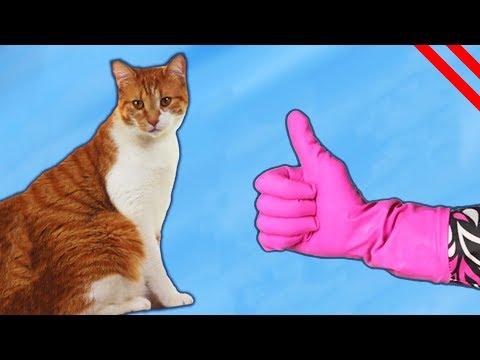 Gatos: Consejos, Trucos y Manualidades!
