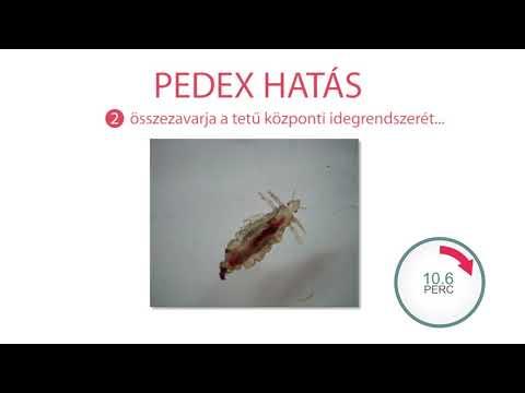 Paraziták felnőtteknél tünetek és kezelés