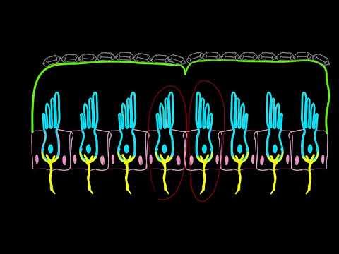 Come prendere lanalisi su una biopsia della prostata