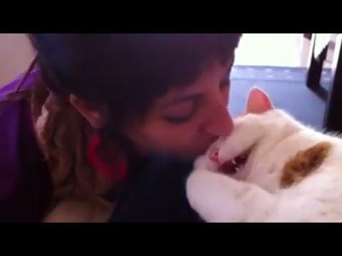 Kissa mäykäisee pussattaessa