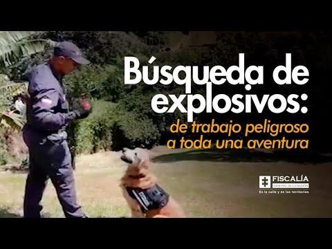 Búsqueda de explosivos: de trabajo peligroso a toda una aventura