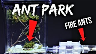 "FIRE ANTS REACT TO THEIR NEW ""ANT PARK"""