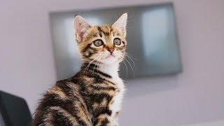 [Cat Live] Visiting bilibili: Pet Friendly Office (Part One)