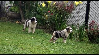 Puppy Rain Play
