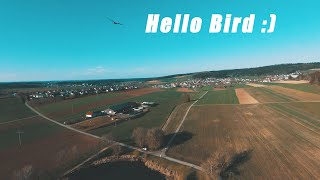 DJI FPV 3rd Flight / Sport Mode - BlackForest FPV Flight [4K]