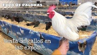 Venta De Gallos Miniatura O Kikirikis En Las Expos  (expo De Queretaro Parte 2)