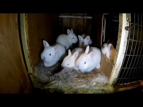 Кролиководство: разведение кроликов как бизнес.
