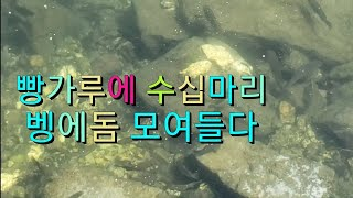 Marina fish opaleye