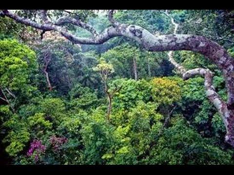 Como Proteger y Restaurar Bosques y Plantas del deterioro Ambiental- TvAgro por Juan Gonzalo Angel