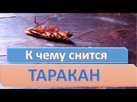 К чему снится таракан | СОННИК