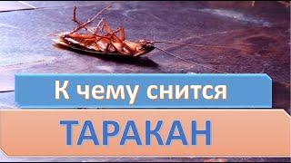 К чему снятся Тараканы видео -К чему снится таракан