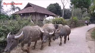 ลุยเวียดนาม(Vietnam)EP21:พาไปเบิ่งเฮือนไตดำ เว่าจากับเอ็มเฒ่าไตดำบ้านเเถนหลวง เดียนเบียนฟู
