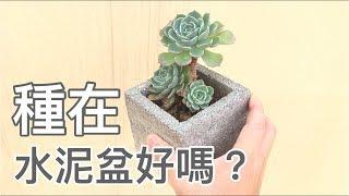 水泥盆的迷思多肉植物種在水泥盆裡真的好嗎?