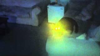 Лазерная кошка