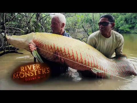 catching a giant arapaima on a fly river monsters action news