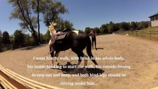 Teaching an old gelding new tricks