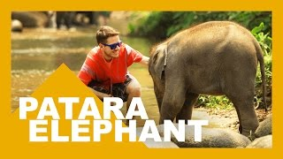PATARA ELEPHANT FARM, CHIANG MAI - Tailândia - HD
