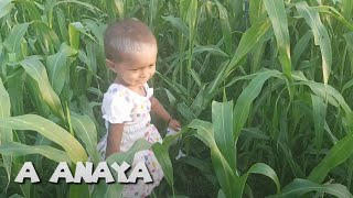 A Anaya trying to walk on Corn field Watch how she walking and through out in bottom Learn and Fun