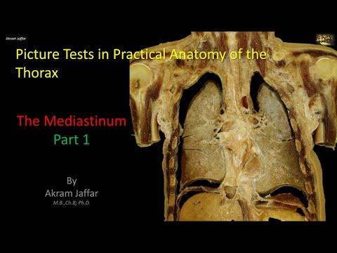 Test obrazkowy z anatomii klatki piersiowej - śródpiersie (część 1)