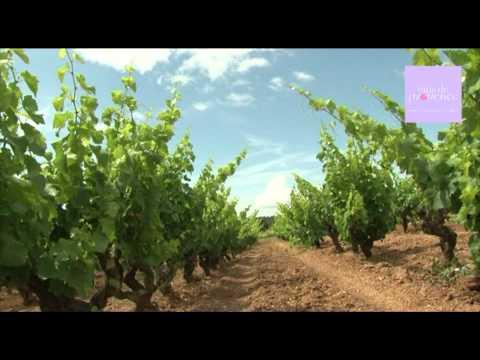 vinsdeprovence - L'AOC Côtes de Provence - 27/07/2011