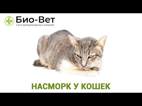 Насморк у кошек 😿// Причины и Лечение // Сеть Ветклиник Био-Вет