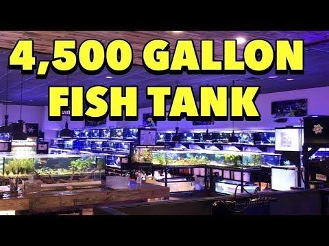 4,500 GALLON AQUARIUM! THE BIGGEST LITTLE FISH STORE IN TEXAS, AQUARIUM GALLERY FISH SHOP TOUR