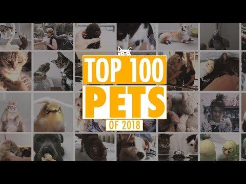Os Melhores Vídeos de Animais de Estimação de 2018