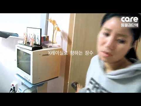 Jangsoo's Story