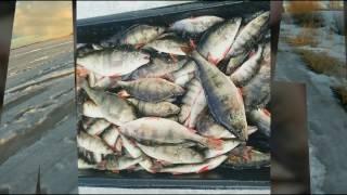 Форум ладожское озеро зимняя рыбалка