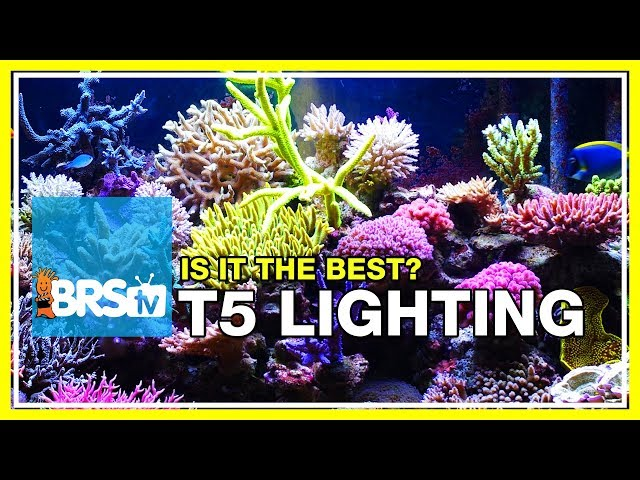 Week 19: Compelling data for using T5 lighting on your reef tank | 52 Weeks of Reefing #BRS160