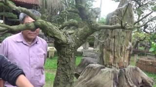 Vườn Cây  Nguyệt Quế Di Sản Việt Nam (Thạch Môn Trang)