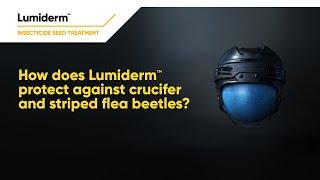 Protection against crucifer & striped flea beetles