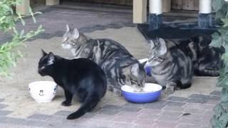 Katze Mimi - Katzenschmaus