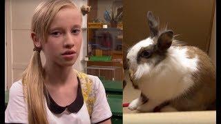 Miała dość królika swojego chłopaka. Postanowiła go sprzedać na aukcji [Szkoła odc. 641]