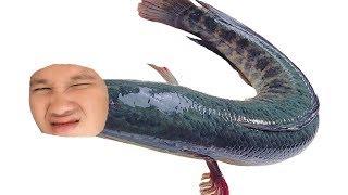 ปลาช่อนของไอพี