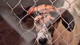 Vídeo em que duas senhoras foram atropeladas por cães de rua volta a tona. Problema de animais abandonados em pauta.