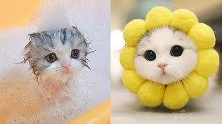 Baby Cats - Cute And Funny Cat Videos Compilation #9 | Aww Animals