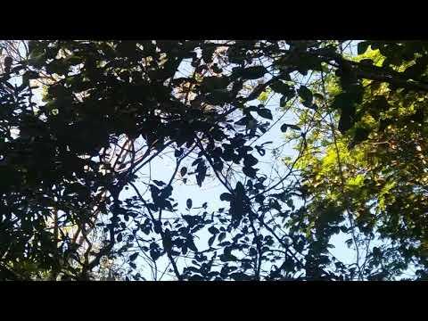 Repórter Favela e os Macacos na Amazônia