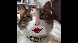 Unbelievably funny cats! A selection of jokes with cats, cats and dogs