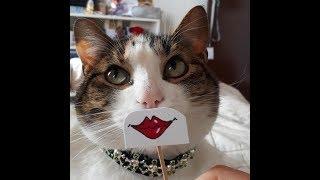Нереально смешные кошки! Подборка приколов с котами, кошками и собаками